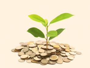 THE MONEY TREE PLAN™